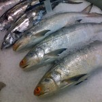 frozenfish2